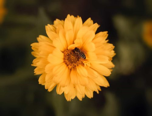 De allergie tegen pollen bestrijden