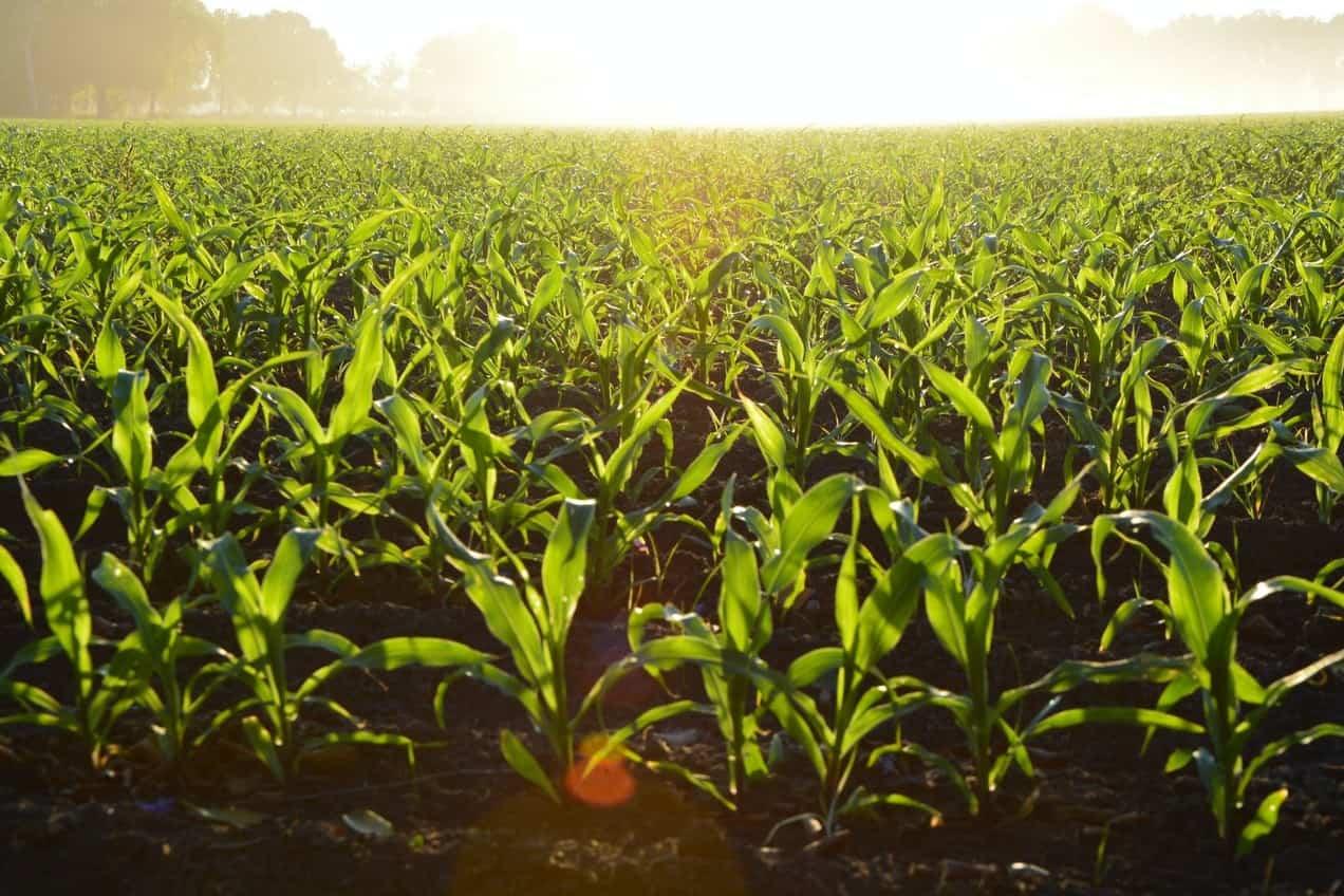 De dominantie van pesticiden